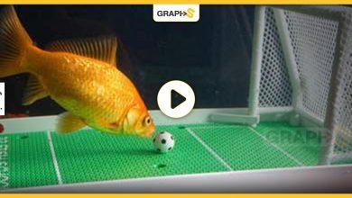 كرة قدم سمك