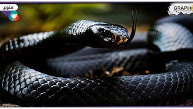 أخطر أنواع الثعابين