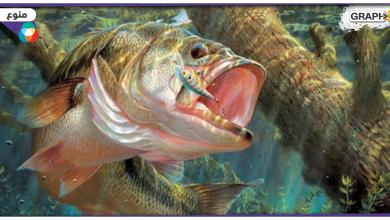 يصيد السمك
