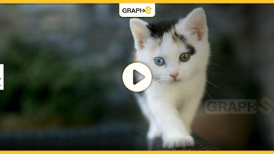 انقاذ قطة من موت محقق