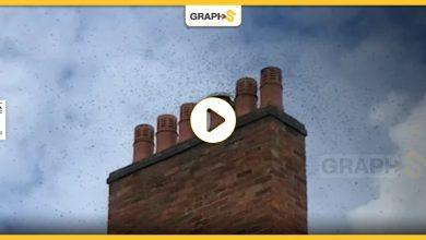 النحل يغزو منزل بريطاني