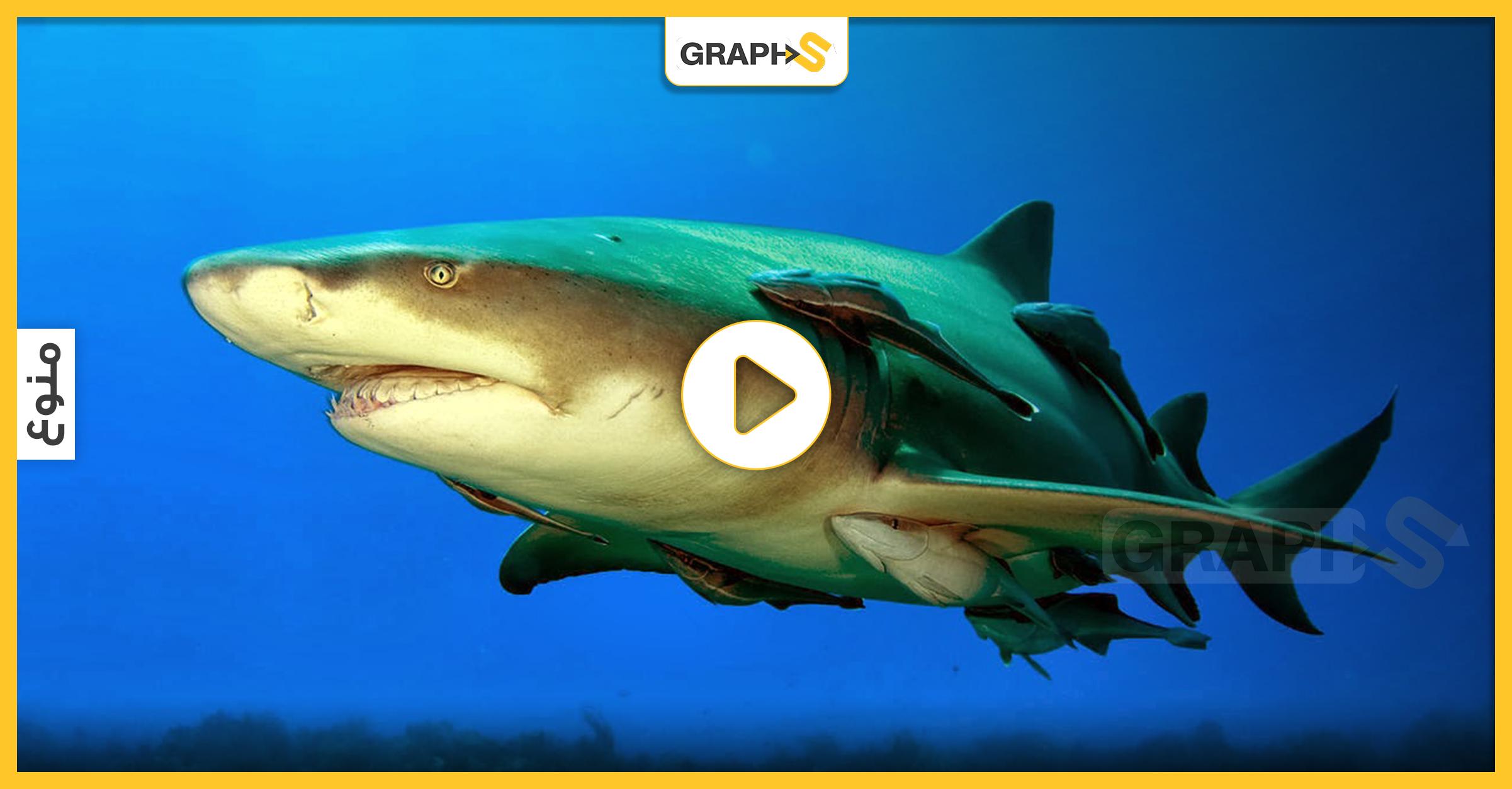 سمكة الريمورا