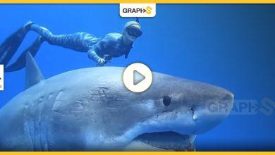القرش الكبير