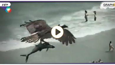 طائر يحمل سمكة