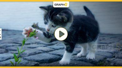 مساعدة قطة صغيرة