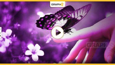 خروج الفراشة السوداء من شرنقتها