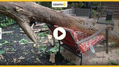 جزع شجرة ضخم