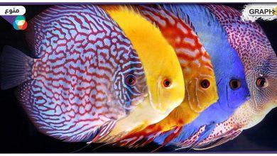 عدسة جوال عين السمكة