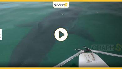 أسماك القرش في أستراليا