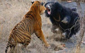 معركة دامية