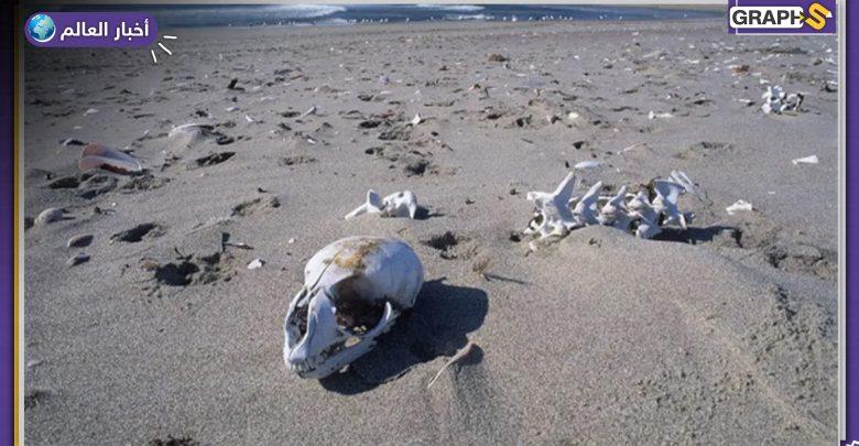 أخطر 5 شواطئ على كوكب الأرض