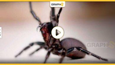 عنكبوت ضخم