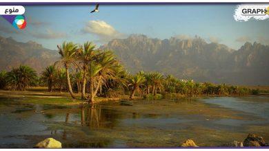 أرخبيل سقطرى