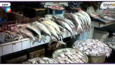 سمكة سامة في الأسواق المصرية