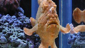 أغرب أنواع الأسماك