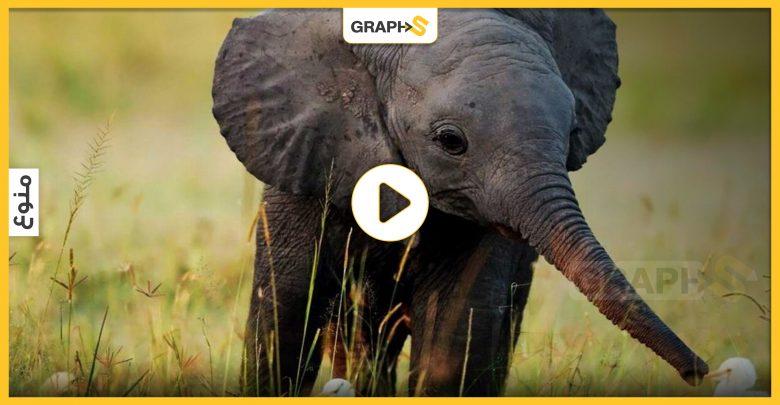 إنقاذ فيل صغير