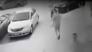 طفلة تتعرض لهجوم كلب ضال في مصر