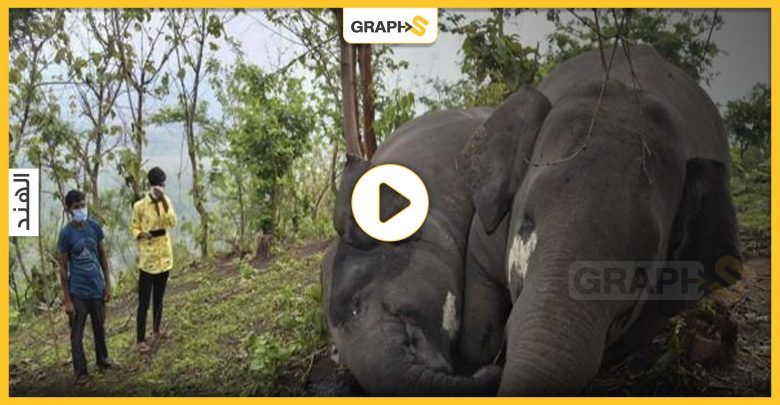 18 فيلاً