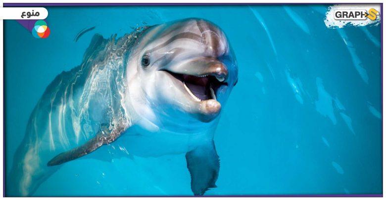 دلفين نادر جدا أبيض اللون
