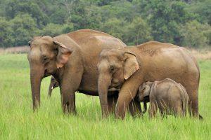 قطيع من الفيلة تقتحم مدينة صينية