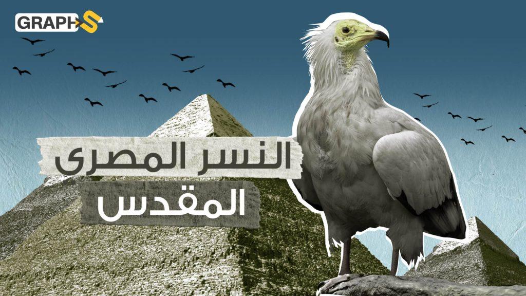 النسر المصري
