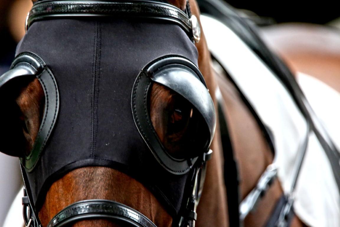 تغطية أعين الخيول