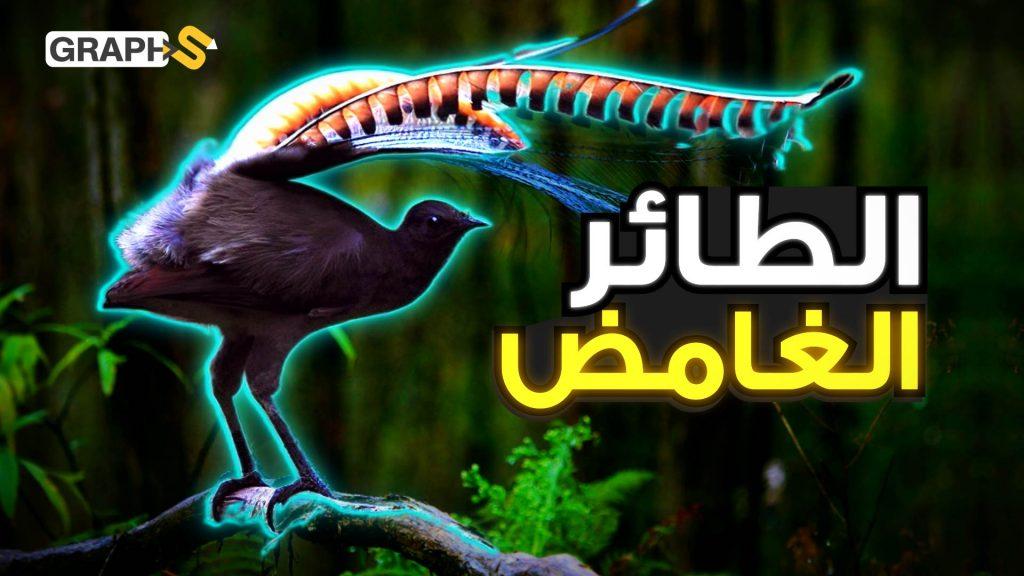 طائر القيثارة