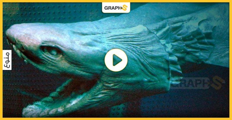 سمك القرش المزركش