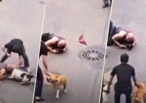 شخص يضحي بنفسه لحماية كلبه في روسيا