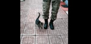 قطة خفيفة الظل