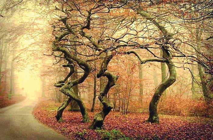 الغابة الراقصة
