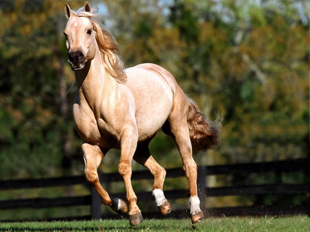إليك الأسباب التي تقف وراء وجوب إنهاء حياة الخيول في حال انكسرت ساقها