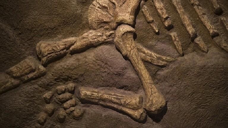 بالفيديو   اكتشاف هيكل عظمي لامرأة في إندونيسيا.. عاشت قبل أكثر من 7200 عام وسلالتها البشرية لم ُيسمع بها على مر التاريخ