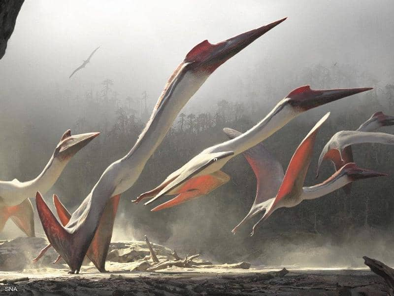 """أكبر من مقاتلة F16 الحربية.. """"وحش عملاق"""" حلق فوق كوينزلاند قبل 105 مليون سنة"""