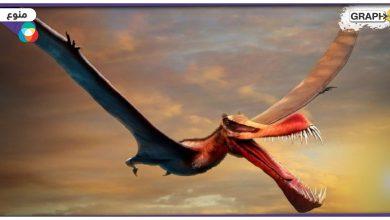 """أكبر من مقاتلة F16 .. اكتشاف""""وحش عملاق"""" حلق فوق كوينزلاند قبل 105 مليون سنة"""