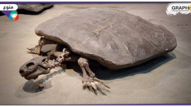 في الصين.. اكتشاف بيضة لسلحفاة عملاقة تعود لحوالي 90 مليون عام.. ومفاجأة صادمة بداخلها