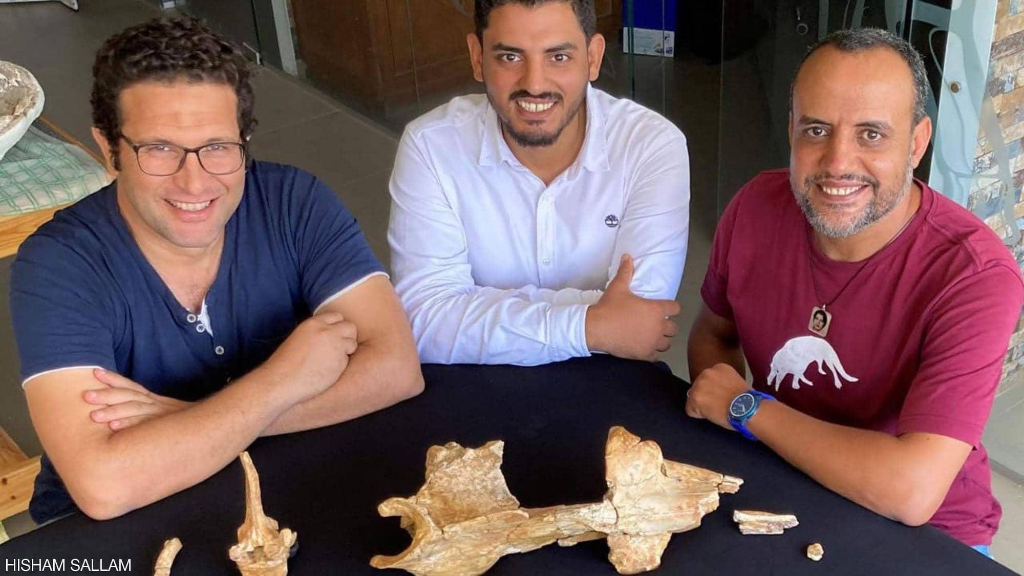 انجاز مصري مذهل.. اكتشاف حوت برمائي عاش قبل 43 مليون سنة