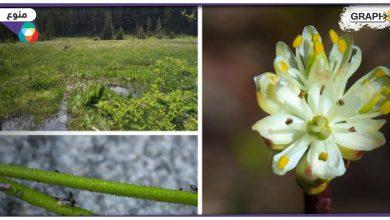 في كندا.. اكتشاف نباتات مفترسة ونادرة.. والعلماء يشرحون عن آلية صيدها لفرائسها