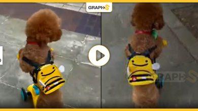 كلب يحمل حقيبة صفراء