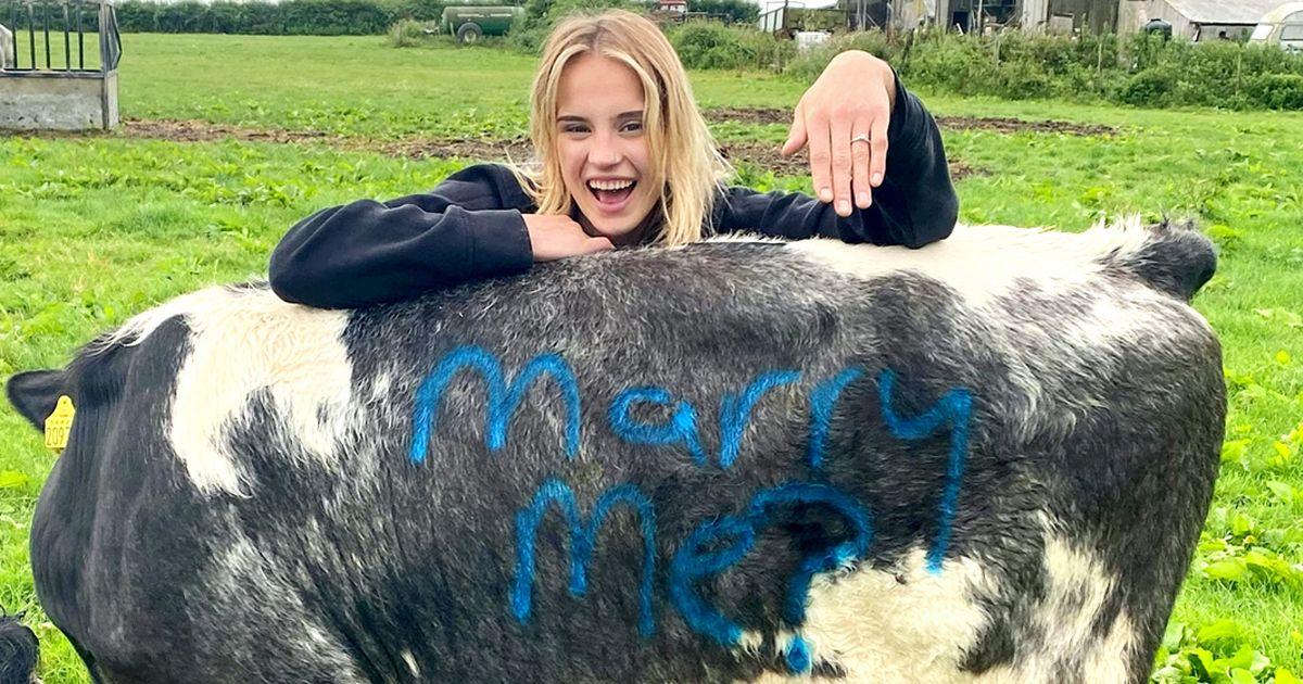 شاهد: شاب بريطاني يعرض الزواج على حبيبته بطريقة غريبة مستعيناً ببقرتين