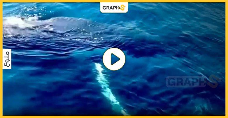 حوت أحدب ضخم يلهو مع ركاب سفينة سياحية ويثير دهشتهم.. حجمه أكبر من حجم السفينة -فيديو