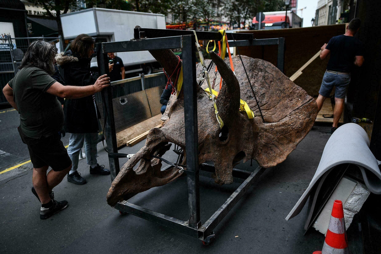 ديناصور معروض للبيع في مزاد.. والسعر يصل لأرقام جنونية
