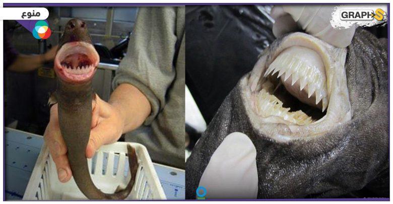 """مجلة علمية: """"كائن فضائي"""" يرعب مخلوقات البحار بسبب """"عضة دائرية"""" – (فيديو وصور)"""
