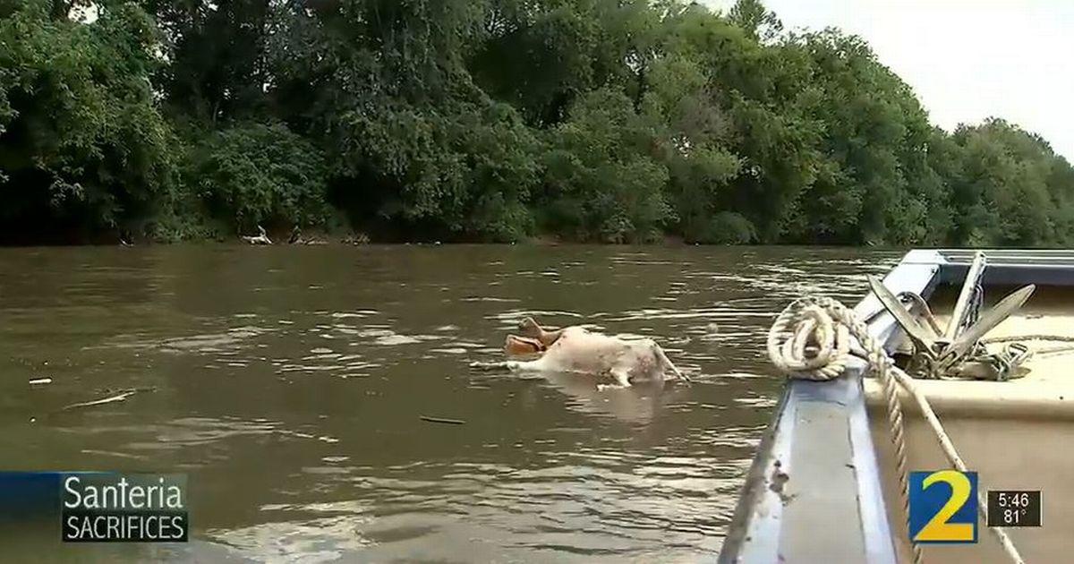عشرات الماعز تطفو بلا رأس في نهر بأمريكا وحالة ذعر تصيب الأهالي - صور