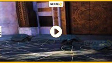""""""" السلاحف الراكضة"""" السريعة تثير مواقع التواصل الاجتماعي وتحصد ملايين المشاهدات والتفاصيل -فيديو"""