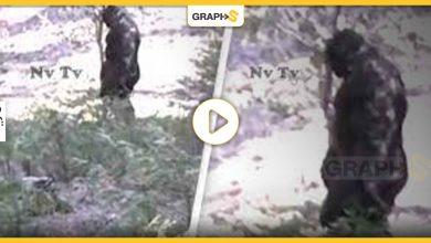 بالفيديو   ظهور كائن غريب ضخم في غابات ولاية آيداهو الأمريكية.. يثير حالة من الرعب