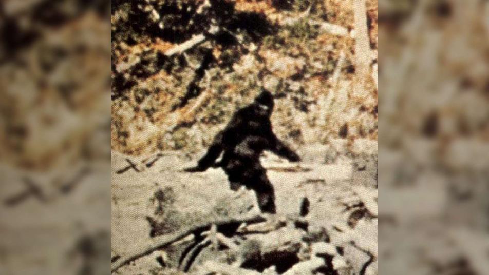 بالفيديو|| ظهور كائن غريب ضخم في غابات ولاية آيداهو الأمريكية.. يثير حالة من الرعب