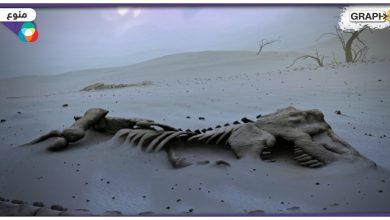 """""""انقراض جماعي لم يشهده أحد"""" حدث في شبه الجزيرة العربية وإفريقيا قبل حوالي 30 مليون عام.. فما سببه"""