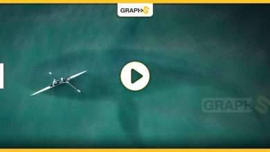 بالفيديو|| اكتشاف نوع جديد من الحيتان القاتلة تعيش على حافة الجرف القاري في المحيط