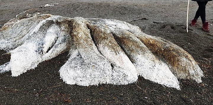 شاهد: أغرب 10 مخلوقات على كوكب الأرض لفظتها شواطئ المحيطات.. بعضها أشبه بكائنات فضائية